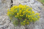 yellow and green plant in the badlands