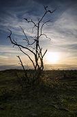 Silhueta de Bush gritante contra deslumbrante céu do sol