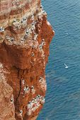 Rock At The North Sea With Many Birds Vertical