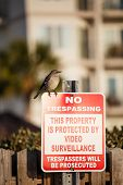 Bird On No Trespassing Sign