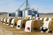 Dairy Calf Hutches