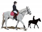 pic of breed horse  - White race horse and lady jockey in uniform - JPG
