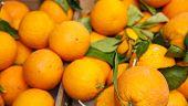 Amalfi Oranges