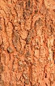 Patterns Of Tree Bark