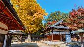 Tamukeyama Hachimangu shrine in Nara in autumn