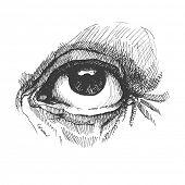 Eye. Realistic vector illustration. Hand drawn.
