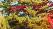 Red Maple Leaves In Autumn At Todaiji Temple In Nara