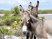 Donkey's Look