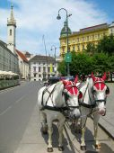Tourist Horses In The Street Of Vienna poster