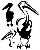 foto of water bird  - pelican bird black and white outline  - JPG