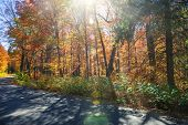 Sunflare in colorful fall forest with country road. Algonquin Provincial park, Ontario, Canada.