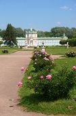 The Road To The Palace Lined With Blooming Peony