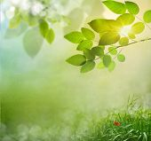 Abstract spring background with grass Defocus