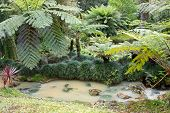 Beautiful Botanic Garden Of Furnas Sao Miguel