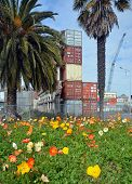 Spring Flowers In Deserted Christchurch City Cbd