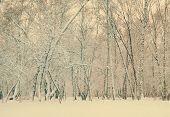 frozen woods under snow, retro filtered, instagram style
