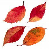Isolated autumn leaves set