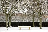 Bench under the snow surrounded with trees, one winter in a garden public