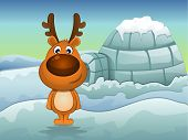 image of igloo  - Reindeer in Winter Igloo in Background vector illustration - JPG