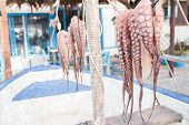 Drying octopus in sun on Kos island