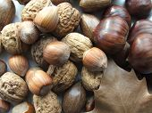 Nuts in autumn and winter