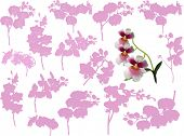 illustration with collection of orchid branches isolated on white background