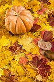 pumpkin on autumn leaves background