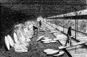 Salt Well, Evaporation, Vintage Engraving.