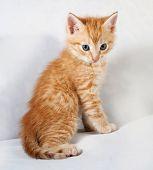 Red Fluffy Kitten Sitting On Gray