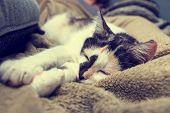 Bored Cat Lying On The Sofa