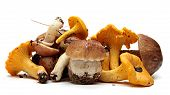 image of boletus edulis  - Wild Foraged Mushroom selection isolated on white background - JPG