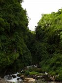 Himalayan Forest With Small River