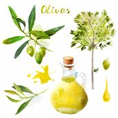Highly detailed watercolor olives set