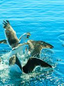 image of flock seagulls  - Animals nature and action - JPG