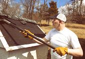 picture of shingles  - Man wearing work gloves taking shingles off a shed roof - JPG