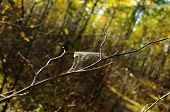 pic of cobweb  - Cobweb on a tree branch in autumn forest - JPG