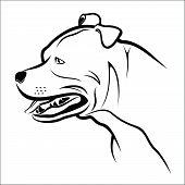 pic of pitbull  - Vector illustration  - JPG