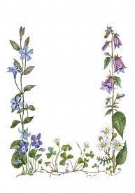 image of sorrel  - botanical water color frame from violet - JPG