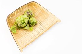 pic of butterbur  - Three harvested green butterbur sprouts in the bamboo sieve on a white background - JPG