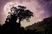 Silhouettes Of Tree Against Dark Sky On Tranquil Nature Background. poster