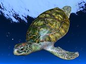 stock photo of sea-turtles  - Underwater Picture of the Turtle - JPG