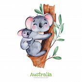 Australia Watercolor Set.cute Koala With Baby On Eucalyptus Tree.watercolor Animals.perfect For   Pr poster