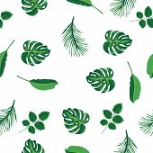 Foliage Pattern Of Green Tropical Plant, Palm And Tree On White Background. Pattern Green Leaves Mon poster