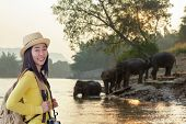 Tourism Asian Women Backpack Seeing The Wild Elephant In The Beautiful Forest At Kanchanaburi Provin poster