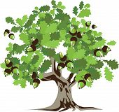 Big green Oak Tree with leaves and acorns. Vector illustration