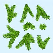 Set Of Fir Branches. Christmas Tree Or Pine Branch Vector Evergreen Illustration. Fir Isolated Holid poster