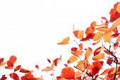 Herbst geht auf die weiße