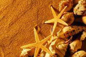 Seashell on sand with golden twilight.
