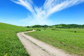 beautiful summer landscape,road in field.