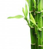 Fresh bamboo with water droplet